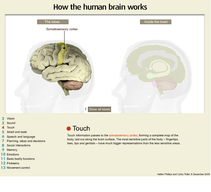 Brain Representations Of Social >> Working With People With Abi 1 Intro To Abi E Understanding